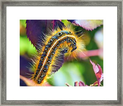 Shagerpillar Framed Print by Bill Tiepelman