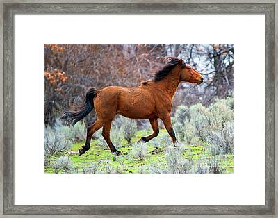 Framed Print featuring the photograph Shaggy And Proud by Mike Dawson