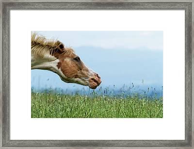 Shake It Off Framed Print by Belinda Greb