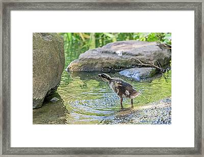Shake It Off Framed Print