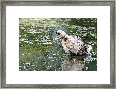 Framed Print featuring the photograph Shake It Off by Steven Santamour
