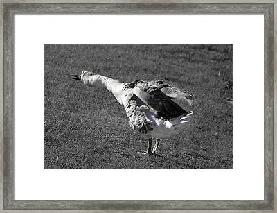 Framed Print featuring the photograph Shake It Out by Phyllis Denton