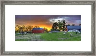 Shaker Animals At Sunset Framed Print
