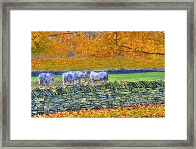 Shaker Horses And Stone Fence 2 Framed Print by Sam Davis Johnson