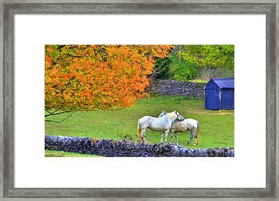 Shaker Horses And Stone Fences Framed Print by Sam Davis Johnson