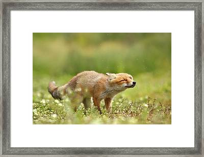 Shaking Fox Framed Print