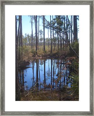 Shallow Pond Framed Print