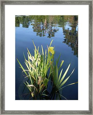 Shalom Park Yellow Canna Lily Framed Print by Warren Thompson