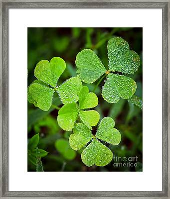 Shamrock Green Framed Print