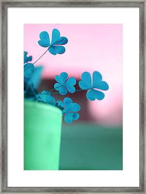 Shamrock Pot V Framed Print