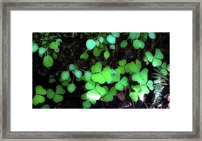 shamrocks #1A Framed Print