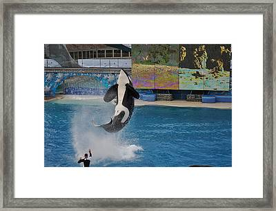 Shamu Splash Framed Print