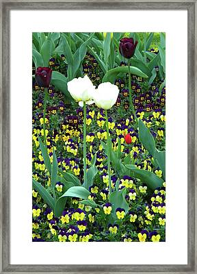Framed Print featuring the photograph Shape And Size by Manuela Constantin