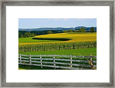 Shapely Cornfield 1 Framed Print