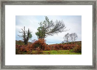 Shapes Of A Nature Framed Print by Svetlana Sewell