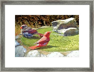 Sharing A Bath Framed Print