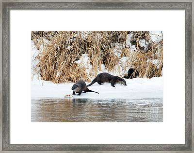 Sharing A Meal Framed Print by Mike Dawson