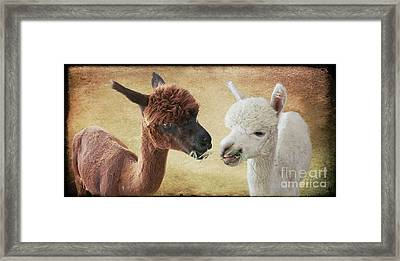Sharing A Meal Framed Print