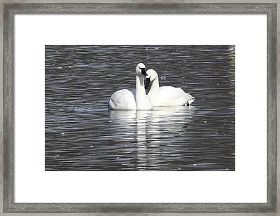 Framed Print featuring the photograph Sharing A Moment by Gary Wightman