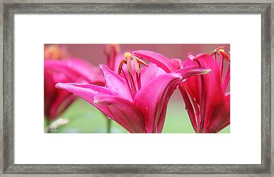 Sharing Framed Print by Ed Smith