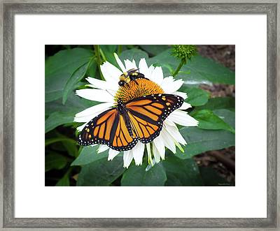 Sharing The Flowers  Framed Print