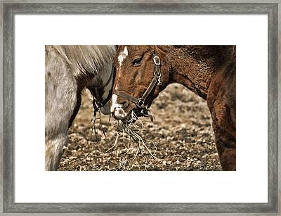 Sharing The Hay Framed Print by JAMART Photography