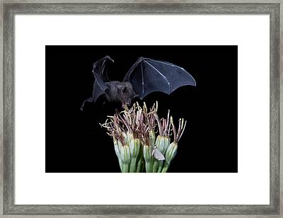 Sharing With The Moth Framed Print by E Mac MacKay