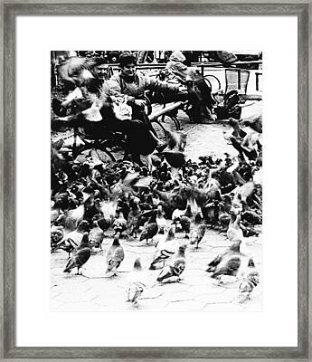 Sharing With The Pigeons  Framed Print by Elizabeth La Caille