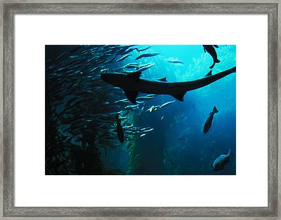 Framed Print featuring the photograph Shark Above by Carl Purcell