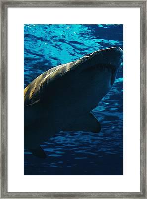 Shark Above Framed Print