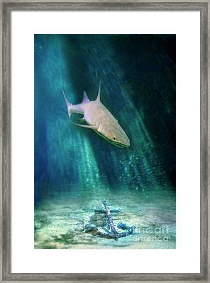 Framed Print featuring the photograph Shark And Anchor by Jill Battaglia