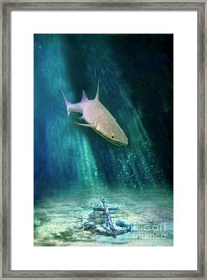Shark And Anchor Framed Print by Jill Battaglia