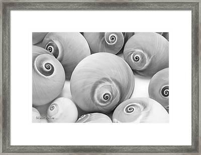 Shark Eye Shells Monochrome Framed Print by LeeAnn McLaneGoetz McLaneGoetzStudioLLCcom