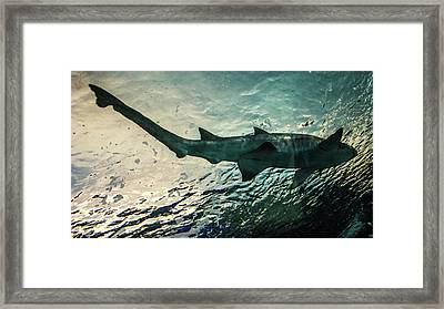 Shark Fins Framed Print by Martin Newman