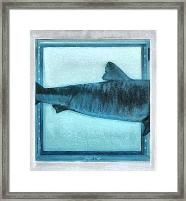 Shark In Magic Cubes - 2 Of 3 - Da Framed Print by Leonardo Digenio