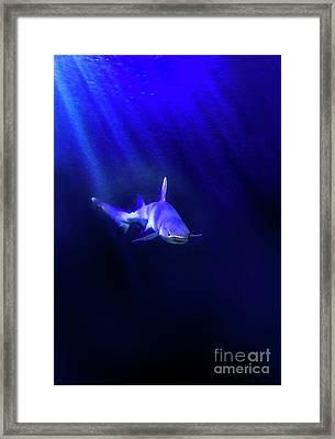 Shark Framed Print by Jill Battaglia