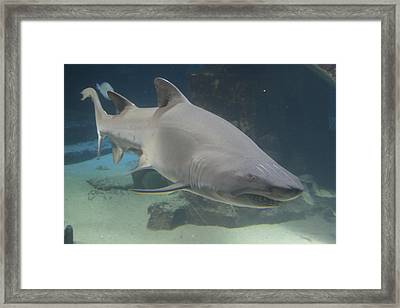 Shark Run Framed Print
