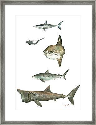Sharks And Mola Mola Framed Print