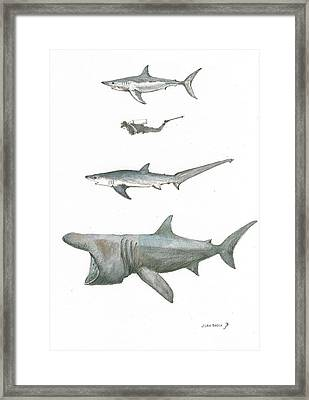 Sharks In The Deep Ocean Framed Print by Juan Bosco
