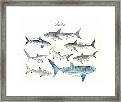 Sharks - Landscape Format Framed Print by Amy Hamilton
