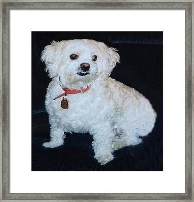 Sharons Friend Framed Print by Fortunate Findings Shirley Dickerson