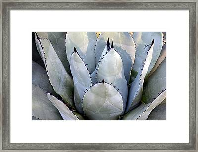 Framed Print featuring the photograph Sharp by Deborah  Crew-Johnson