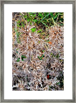 Sharp Thorns. Island Of Love. Framed Print by Andy Za