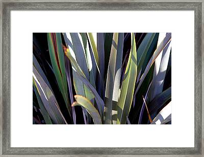 Sharp Tongue Framed Print by Jez C Self