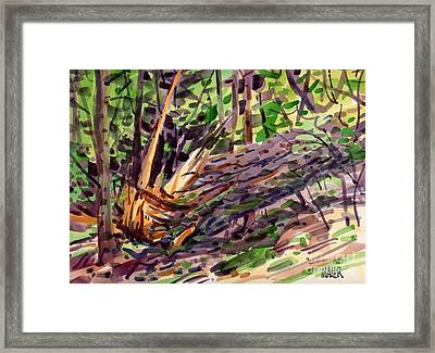Shattered Pine Framed Print by Donald Maier