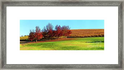 Shaw And Smith Winery Framed Print by Bill Robinson