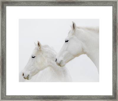 She Dreamed Of White Horses Framed Print by Ron  McGinnis