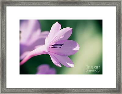 Framed Print featuring the photograph She Listens Like Spring by Linda Lees