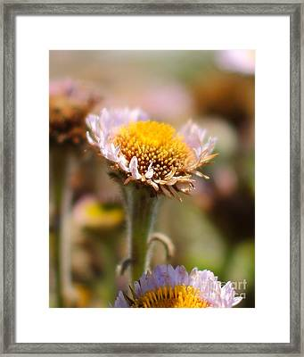 She Loves Me Not Framed Print by Wingsdomain Art and Photography