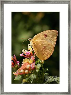 She Wears Her Heart On Her Wing Framed Print by Ana V Ramirez